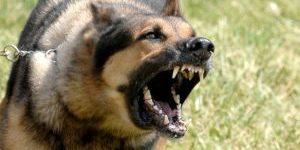 dangerous-dog